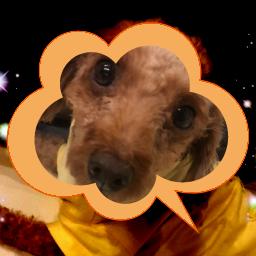 肉きゅう 犬 アイコンコレクション